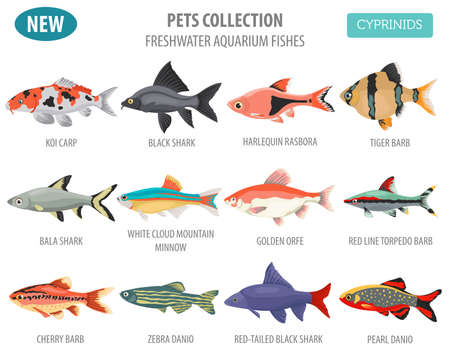 Freshwater aquarium fishes breeds icon set flat style isolated on white background. Cyprinids. Create own infographic about pets. Vector illustration. Imagens - 84921734
