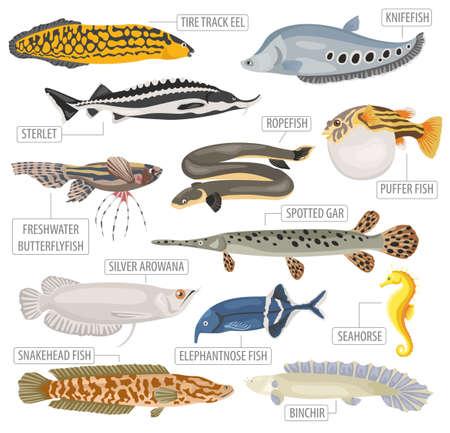Ungewöhnliche Süßwasseraquariumfischzuchtikonensatz flacher Art lokalisiert auf weißem Hintergrund. Erstellen Sie eigene Infografik über Haustier. Vektor-Illustration. Standard-Bild - 84921732