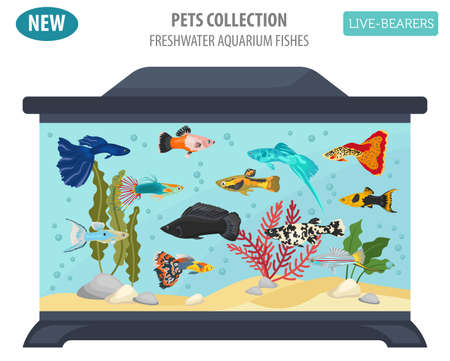 molly fish: Freshwater fishes breeds icon set flat style isolated on white background. Live-bearing aquarium fish. Create own infographic about pets. Vector illustration.