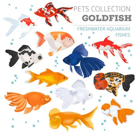 L'acquario d'acqua dolce pesca stile piano stabilito dell'icona delle razze isolato su fondo bianco. Goldfish. Crea la tua infografica sugli animali domestici. Illustrazione vettoriale