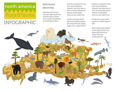 andean condor: Isometric 3d North America flora and fauna map elements. Animals, birds and sea life. Build your own geography infographics collection. Vector illustration Illustration
