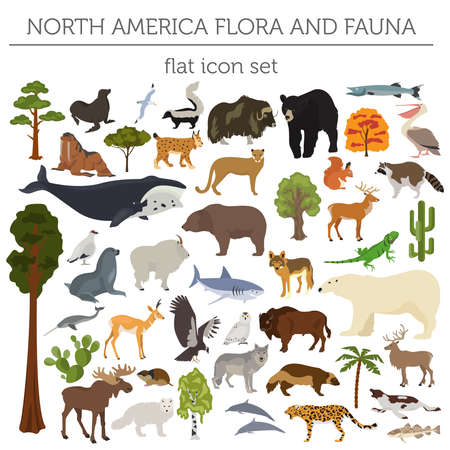 andean condor: North America flora and fauna flat elements. Animals, birds and sea life big set. Build your geography infographics collection. Vector illustration
