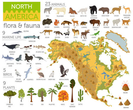 Noord-Amerika flora en fauna kaart, vlakke elementen. Dieren, vogels en zee leven grote reeks. Bouw uw infographicscollectie voor geografie. Vector illustratie
