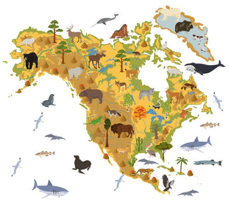 andean condor: North America flora and fauna map, flat elements. Animals, birds and sea life big set. Build your geography infographics collection. Vector illustration