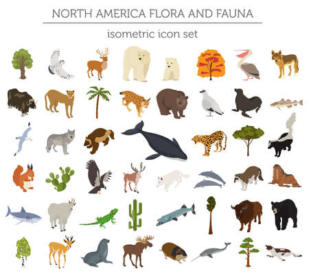 andean condor: Isometric 3d North America flora and fauna elements. Animals, birds and sea life. Build your own geography infographics collection. Vector illustration