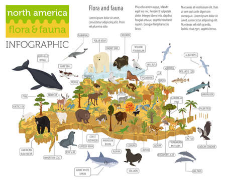 Isometric 3d North America flora and fauna map elements. Animals, birds and sea life. Build your own geography infographics collection. Vector illustration Çizim