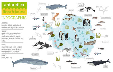 Antarctic, Antarctica,  flora and fauna map, flat elements. Animals, birds and sea life big set. Build your geography infographics collection. Vector illustration Vettoriali