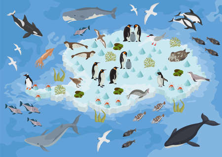 Isometric 3d Antarctica flora and fauna map elements. Animals, birds and sea life. Build your own geography infographics collection. Vector illustration