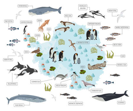 Antarctic, Antarctica,  flora and fauna map, flat elements. Animals, birds and sea life big set. Build your geography infographics collection. Vector illustration Vectores