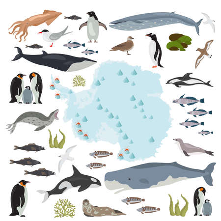 Antarctic, Antarctica, flora and fauna map, flat elements. Animals, birds and sea life big set. Build your geography info graphics collection. Illustration