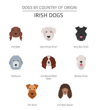 Dogs by country of origin. Irish dog breeds. Infographic template. Vector illustration Illustration