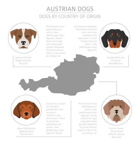 Dogs by country of origin. Austrian dog breeds. Infographic template. Vector illustration  イラスト・ベクター素材