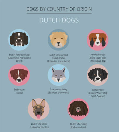 Dogs by country of origin. Dutch (Holland) dog breeds. Infographic template. Vector illustration