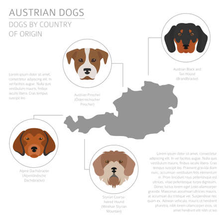 Dogs by country of origin. Austrian dog breeds. Infographic template. Vector illustration Illustration
