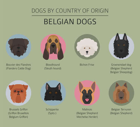 Dogs by country of origin. Belgium dog breeds. Infographic template. Vector illustration