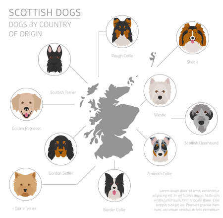 Dogs by country of origin. Scottish dog breeds. Infographic template. Vector illustration  イラスト・ベクター素材