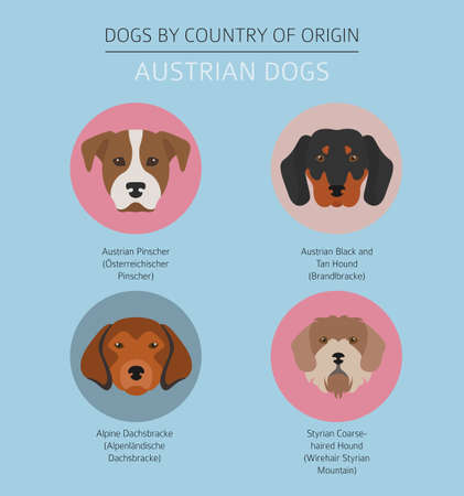 Dogs by country of origin. Austrian dog breeds. Infographic template. Vector illustration Иллюстрация