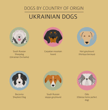 Dogs by country of origin. Ukrainian dog breeds. Infographic template. Vector illustration