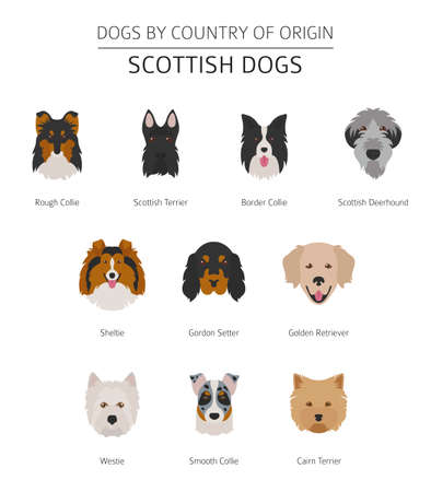 Dogs by country of origin. Scottish dog breeds. Infographic template. Vector illustration Vettoriali