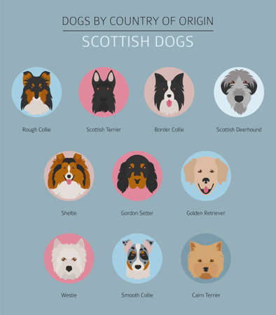 Dogs by country of origin. Scottish dog breeds. Infographic template. Vector illustration Illustration