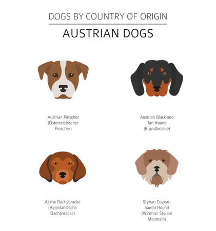 Dogs by country of origin. Austrian dog breeds. Infographic template. Vector illustration Ilustrace