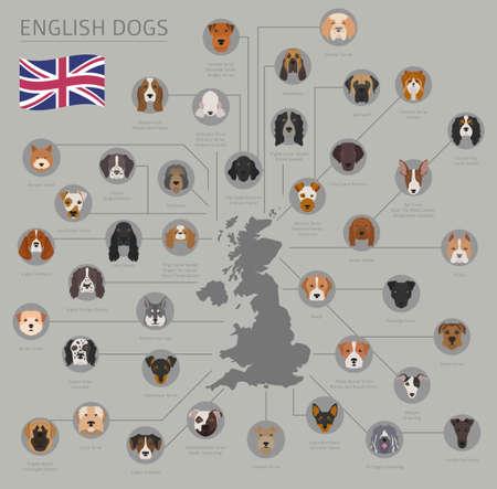 Perros por país de origen. Razas de perros ingleses. Plantilla de infografía Ilustración vectorial