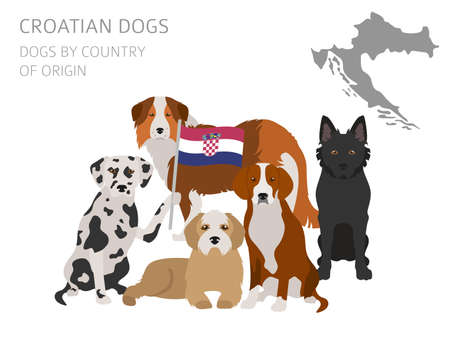 Dogs by country of origin. Croatian dog breeds. Infographic template. Vector illustration