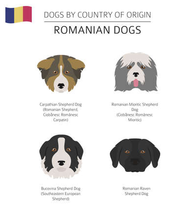 Dogs by country of origin. Romanian dog breeds. Infographic template. Vector illustration