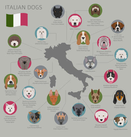 Dogs by country of origin. Italian dog breeds. Infographic template. Vector illustration