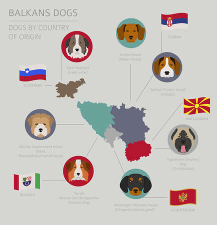 Dogs by country of origin. Balkans dog breeds: Macedonian, Bosnian, Montenegrin, Serbian, Slovenian. Infographic template. Vector illustration