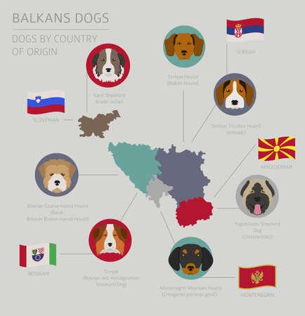 Perros por país de origen. Razas de perros de los Balcanes: macedonio, bosnio, montenegrino, serbio, esloveno. Plantilla de infografía Ilustración vectorial