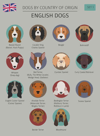 Dogs by country of origin. English dog breeds. Infographic template. Vector illustration Stock Vector - 96329310