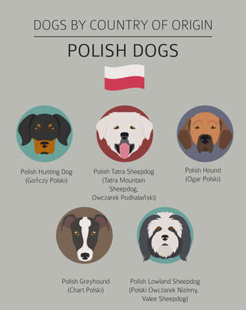 Dogs by country of origin. Polish dog breeds. Infographic template. Vector illustration