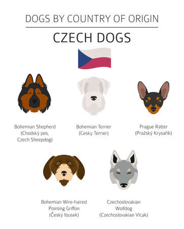 Dogs by country of origin. Czech dog breeds. Infographic template. Vector illustration Vectores