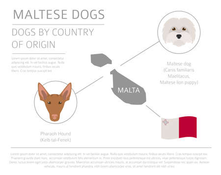 Dogs by country of origin. Maltese dog breeds. Infographic template. Vector illustration
