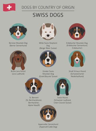 Dogs by country of origin. Swiss dog breeds. Infographic template. Vector illustration Illustration
