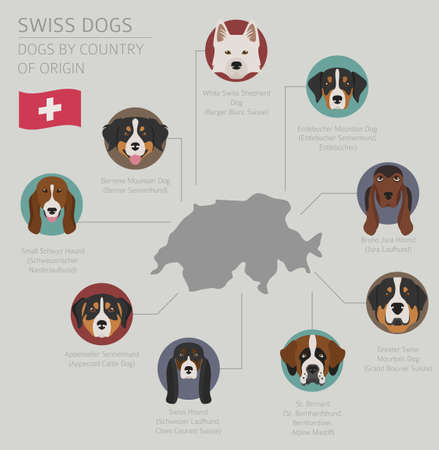 Dogs by country of origin. Swiss dog breeds. Infographic template. Vector illustration Stock Illustratie
