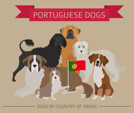 Dogs by country of origin, Portuguese dog breeds. Infographic template vector illustration.