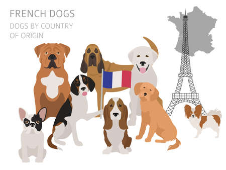 Dogs by country of origin, French dog breeds. Infographic template vector illustration.