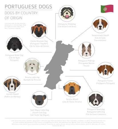 Dogs by country of origin of Portuguese dog breeds. Info graphic template Vector illustration Vettoriali