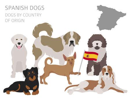 Honden per land van herkomst, Spaanse hondenrassen. Infographic sjabloon vectorillustratie.