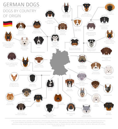 Dogs by country of origin, German dog breeds. Infographic template vector illustration.