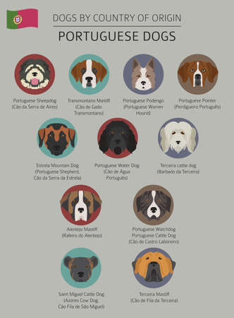 Dogs by country of origin Vector illustration