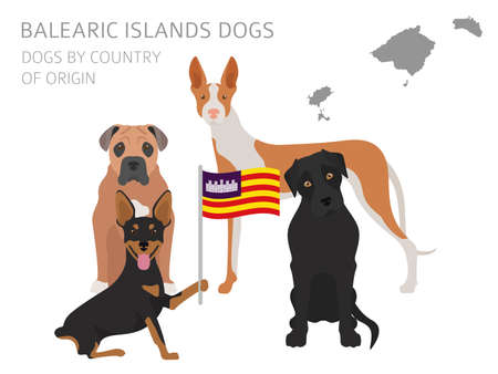 Dogs by country of origin, Spain, Balearic islands dog breeds. Infographic template vector illustration. Иллюстрация