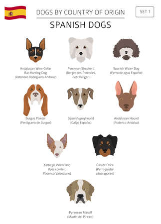 Dogs by country of origin, Spanish dog breeds. Infographic template vector illustration. Ilustração