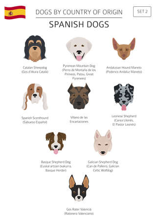 Dogs by country of origin, Spanish dog breeds. Infographic template vector illustration. 일러스트