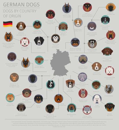 Honden per land van herkomst, Duitse hondenrassen. Infographic sjabloon vectorillustratie.