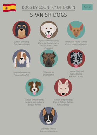 Dogs by country of origin, Spanish dog breeds. Infographic template vector illustration. Vettoriali