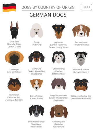 Dogs by country of origin. German dog breeds. Infographic template vector illustration. 일러스트