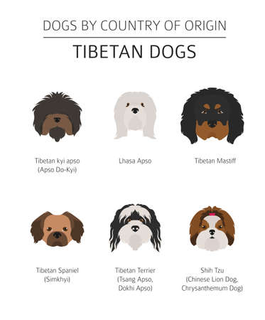 Dogs by country of origin. Tibetan dog breeds, chinese mountain dogs. Infographic template. Vector illustration  イラスト・ベクター素材